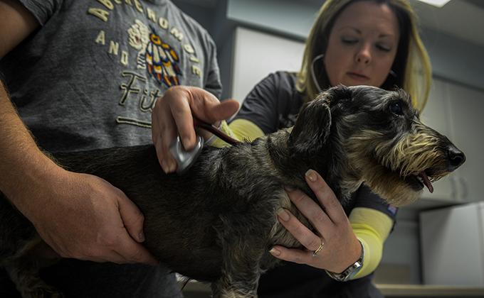 Pet health certificates: